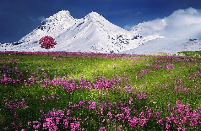zasněžené hory, rozkvetlá louka, strom