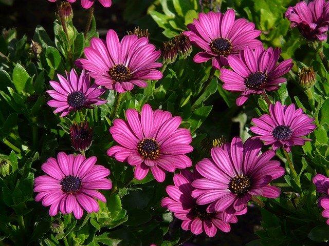 fialové květiny.jpg